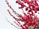 봄꽃들의 향연