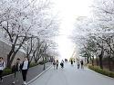 국민대 벚꽃엔딩 Part2