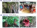 키나발루산 정글투어 1박2일 : 코타키나..