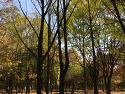 양재 시민의숲 2016