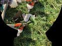 솔식초 만들기