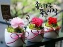 ~~ 봄꽃 축제 ~~
