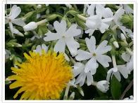 연수원에 핀 꽃들....