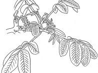 3-49. 호두나무