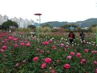 수업후 정관 장미공원 투어