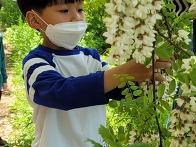 아까시아 꽃이 촘촘히