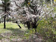 벚꽃 핀 마을