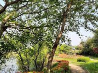 호수공원의 봄