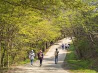 내포문화숲길의 봄 풍경