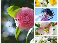겨울에만 피는 꽃