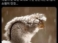 꼬리로 우산 만드는 다람쥐