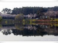 봄 유원지의 반영