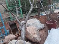대형나무, 공사목 작업