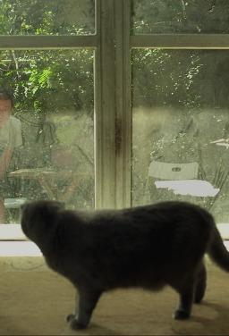 고양이를 돌려줘