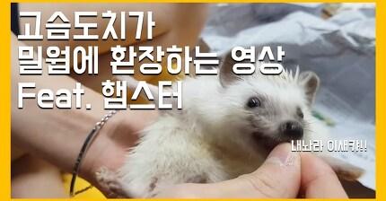 밀웜에 환장하는 고슴도치 소닉이 (feat. 햄스터)