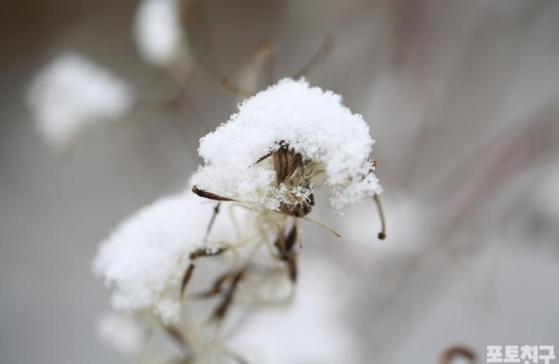 [포토친구] 겨울 소식