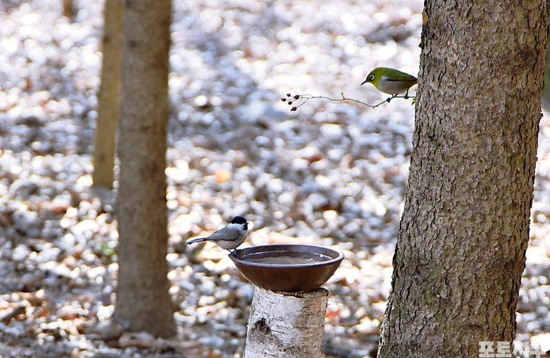 [포토친구] 새들의 봄나들이