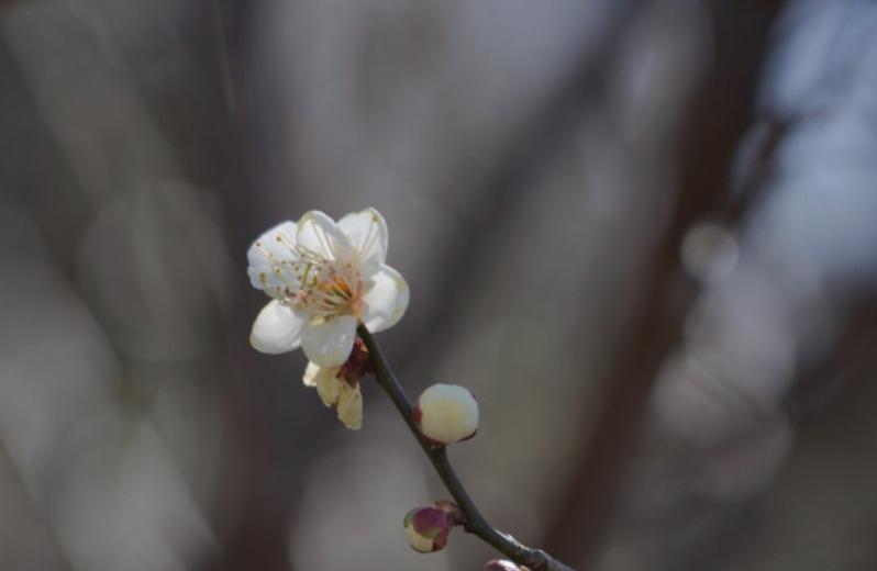 [포토친구] 당신의 봄날