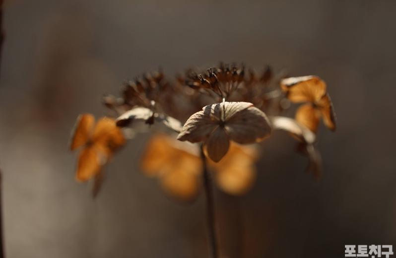 [포토친구] 꽃 진 자리, 꽃 필 자리