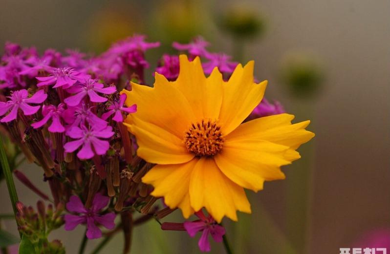 [포토친구] 제철 맞은 6월 꽃들