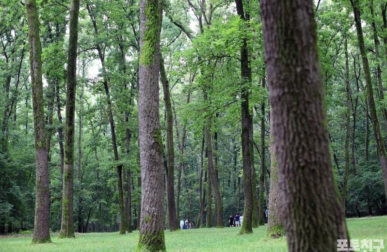[포토친구] 쉼이 있는 숲