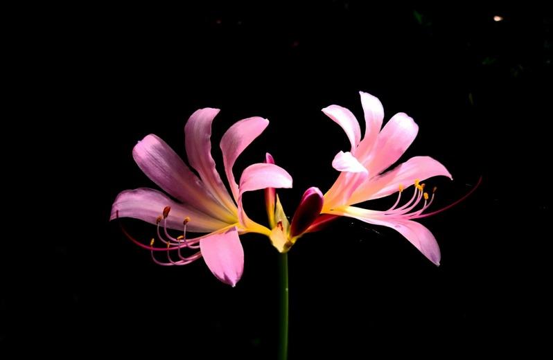 [포토친구] 여름꽃