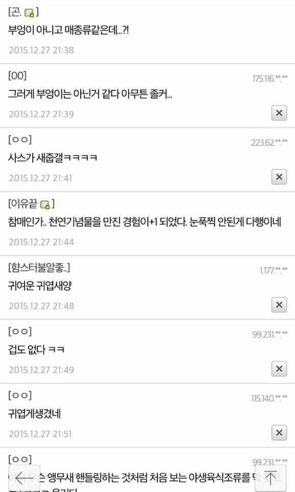 디씨의 부엉이 주운 썰 - 꾸르
