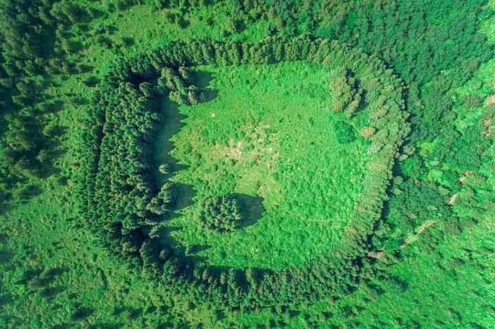 제주도 아부오름 안의 작은숲