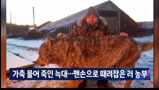 늑대를 맨손으로 때려잡은 러시아 농부 - 꾸르