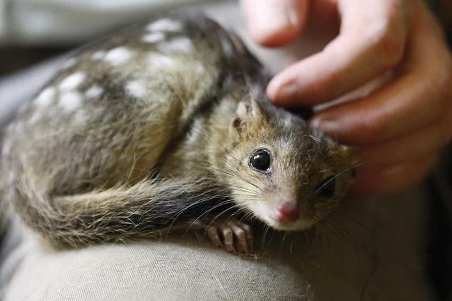 길고양이 200만마리 살처분한 호주 근황 - 꾸르
