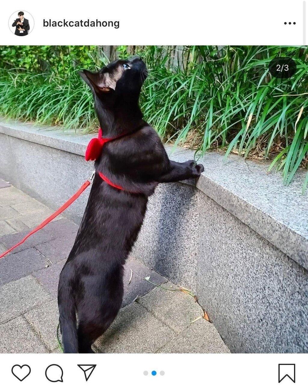 낚시터에서 유기된 고양이를 기르게된 박수홍 근황 - 꾸르