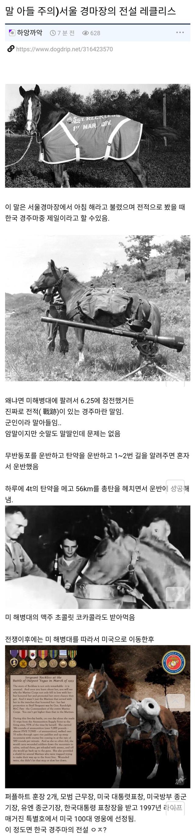 서울 경마장의 전설 레클리스 - 꾸르