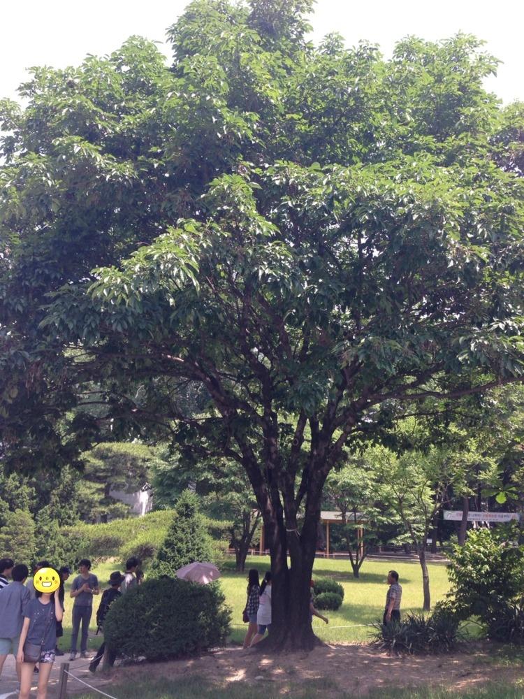 홍릉 수목원 2