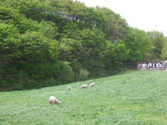 대관령 양떼목장과 비선대