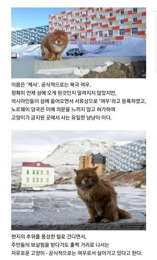 [이야기]고양이 출입이 금지된 어느 섬에 살고 있는 북극여우