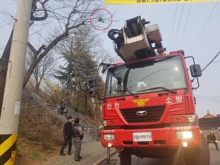 나무에 매달린 길고양이 [인천 중부소방서 제공]