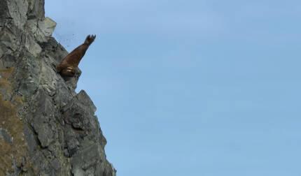 해안가 절벽에서 추락하는 바다코끼리 모습 [자료: 넷플릭스 다큐멘터리 '우리의 지구']