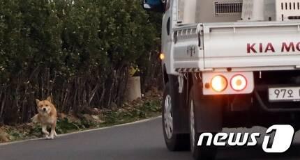 제주시 우도면서에서 유기견 포획팀이 탄 트럭이 거리를 배회하는 유기견에 접근하고 있다. © News1