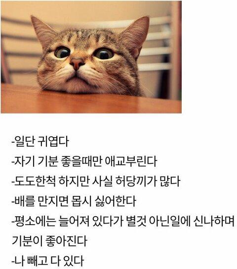 [기타]고양이와 여자친구의 공통점