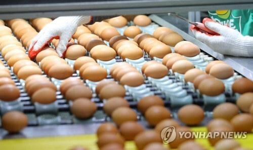 (원주=연합뉴스) 양지웅 기자 = 살충제 계란 파장이 전국으로 확산 중인 16일 강원 원주시의 한 양계장에서 직원들이 달걀 선별작업을 하고 있다. 이 농장은 전날 국립농산품질관리원의 검사를 통과해 달걀 출하 작업을 재개했다.     yangdoo@yna.co.kr
