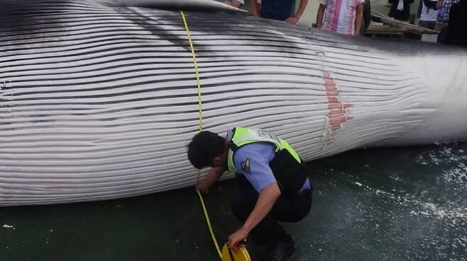 지난해 9월 포항 구룡포항에 들어온 참고래.  포항해양경비안전서 제공