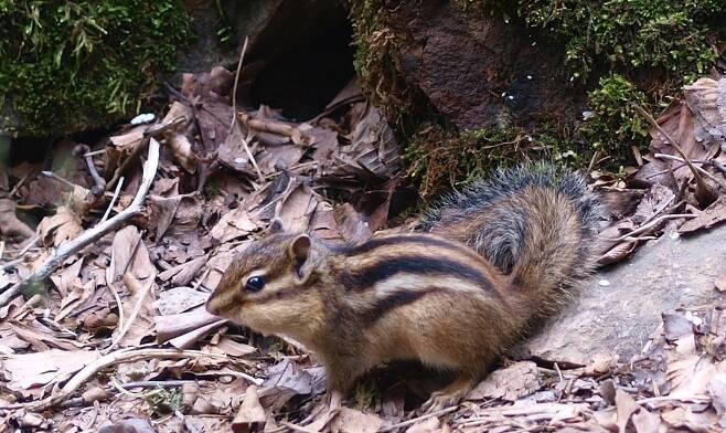 동작과 모습이 귀엽고 깜찍한 다람쥐는 1960년대부터 애완동물로 많은 개체가 수출됐다. 조홍섭 기자