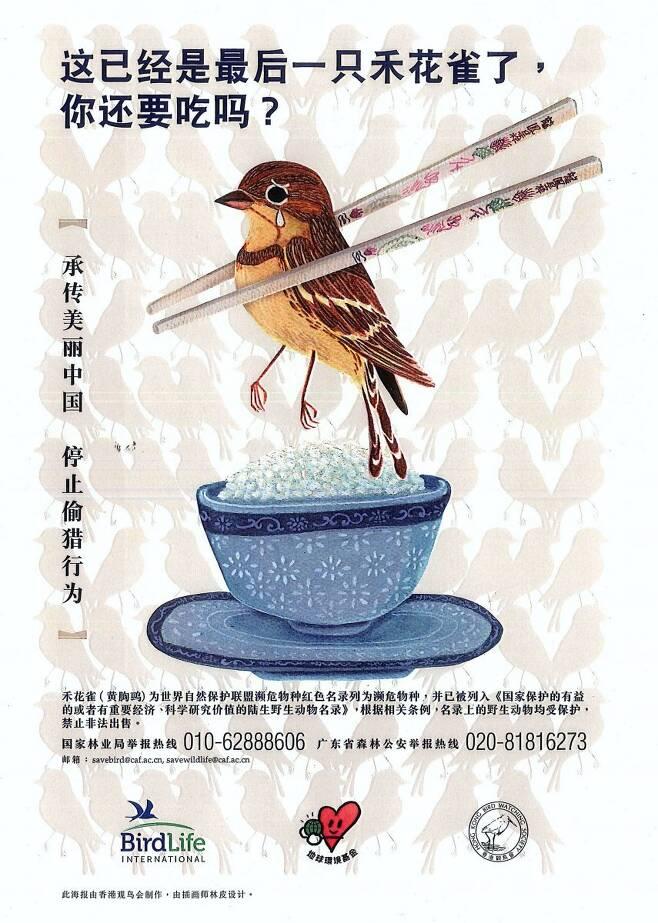 검은머리촉새의 보전을 촉구하는 국제조류보호협회의 포스터.  국제조류보호협회 제공