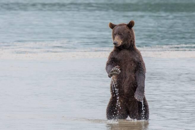 버코프 데니스가 러시아 캄차카반도에서 촬영한 작품. 캄차카는 불곰의 주요 서식지다. 제목은 '걱정 마'.