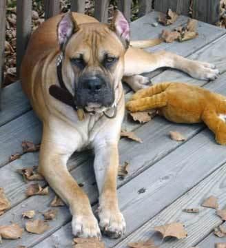 혼자 노는 개는 자극 없는 환경에서 무료해 하고 있다는 증거일 수 있다. 위키미디어 코먼스 제공