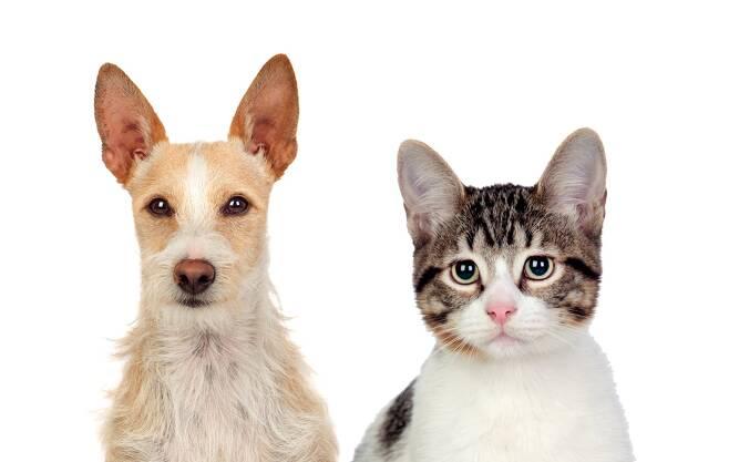 탄수화물 함량이 높은 개 사료를 고양이가 먹는 것은 좋지 않다. 클립아트코리아 제공