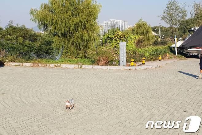 12일 서울 서초구 반포한강공원에서 산책 중인 견주가 개의 목줄을 풀고 산책하는 모습.© News1 이기림 기자