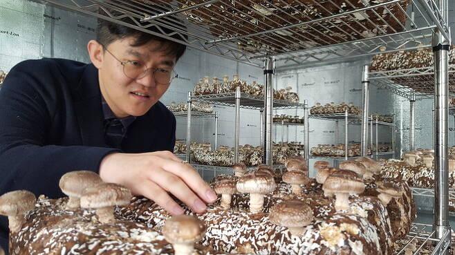 23일 인천시 미추홀구 옛 용현1·4동주민센터에 마련된 버섯재배 도시농장 교육장에서 최환 빈집은행 대표가 버섯을 살펴보고 있다. 이정하 기자