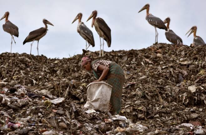 쓰레기더미를 뒤지는 인도 여성과 새들 로이터