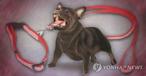 목줄 안 한 반려견 주민 공격(PG) [제작 이태호] 일러스트